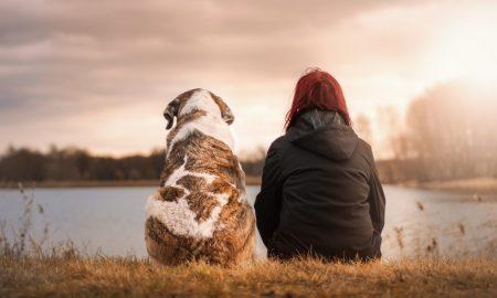 Consejos para antes de decidirnos a tener un perro