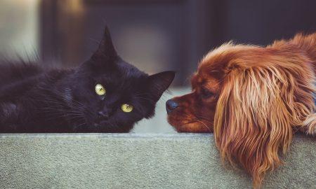 Cosas de casa peligrosas para tu mascota