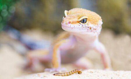 Escoger tu primer reptil