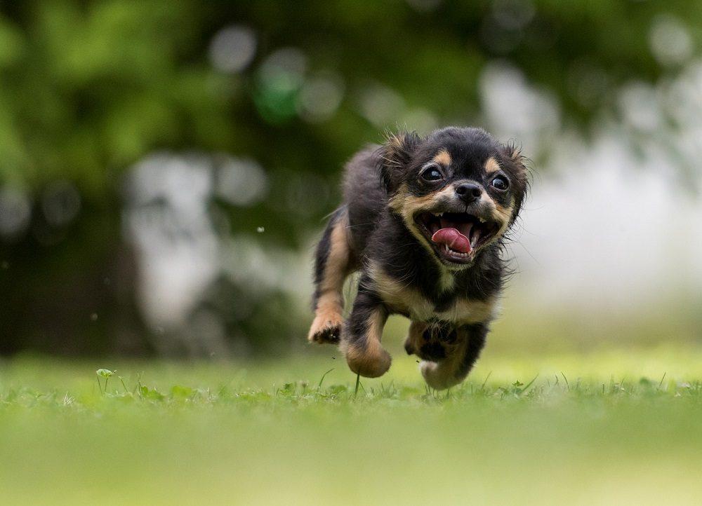 Para tener un perro hay que tener tiempo