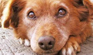 ¿Cómo adoptar un animal de una protectora de animales?