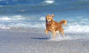 Playas de España que aceptan perros para disfrutar con tu mejor amigo