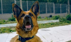 Arnés o collar para perros ¿Cual es mejor en cada caso y cuál escoger?