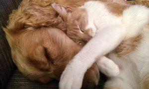 ¿Cómo conseguir que perros y gatos convivan en la misma casa?