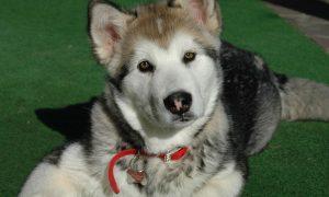 señales y el lenguaje de los perros