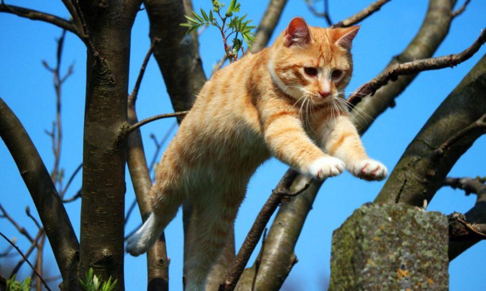 Las habilidades de los gatos más sorprendentes