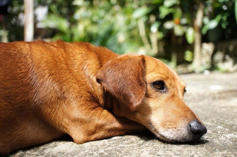 Cómo interpretar las señales y el lenguaje de los perros