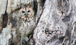 El camuflaje de los animales: su arma secreta para defenderse