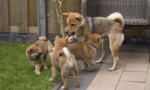 Consejos para escoger un buen criadero si decides comprar un animal