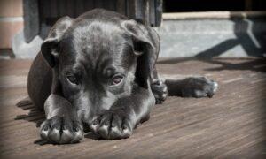 Ansiedad en los perros: causas, síntomas y consejos para evitarla