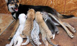 El instinto maternal en los animales: una regresión a lo más básico