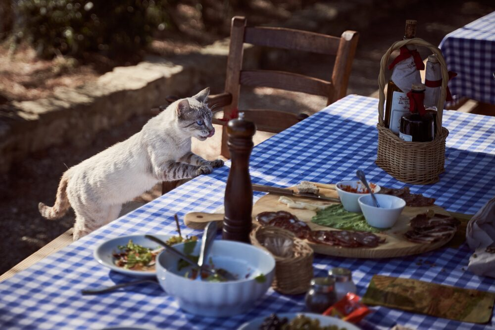 Síntomas de que tu mascota necesita cambiar de alimentación