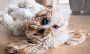 Cuál es la temperatura ideal en casa para un perro ¿Pueden dormir fuera?