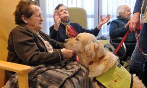 Terapias con perros ¿En qué consisten y qué beneficios aportan?