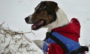 ¿Es realmente necesario abrigar a los perros en invierno?
