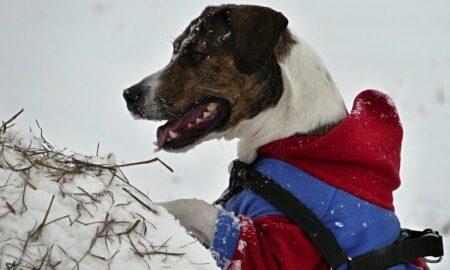 Abrigar a los perros en invierno