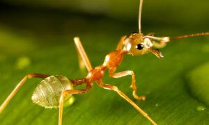 13 curiosidades sobre las hormigas que te sorprenderán y no esperabas