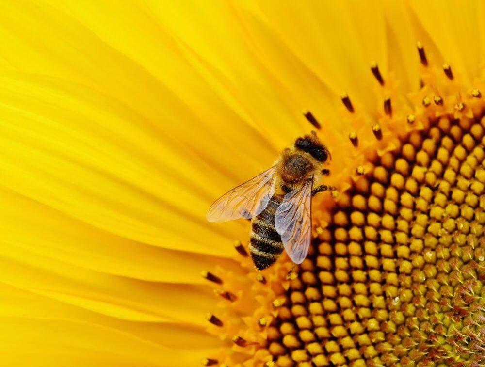 13 datos curiosos que tienes que conocer de las abejas