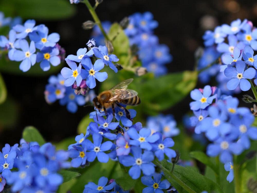 13 datos curiosos sobre las abejas que te sorprenderán