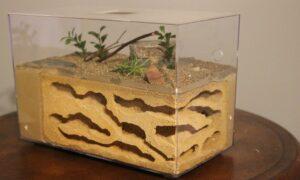 Consejos y trucos para crear tu primera granja de hormigas