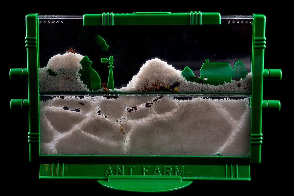 Granja de hormigas de juguete