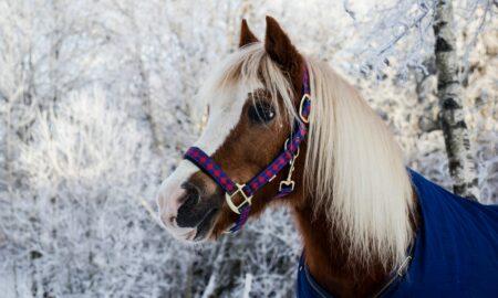 ¿Cuáles son los cuidados para un caballo en invierno?
