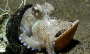 Los pulpos son uno de los animales más inteligentes
