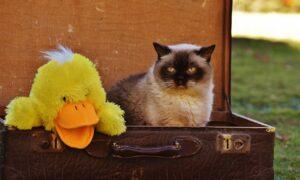Viajar en avión con gato: todo lo que debes saber antes de hacerlo