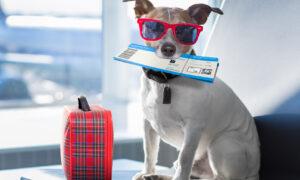 Viajar en avión con perro: todo lo que debes saber antes de hacerlo