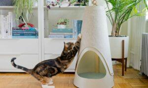 Cómo enseñar a un gato a utilizar el rascador de forma sencilla
