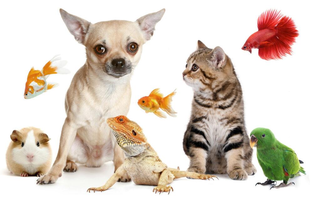 Los animales de apoyo emocional