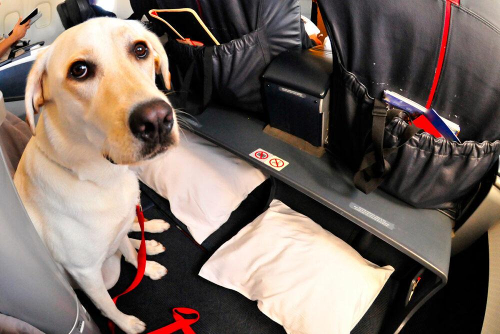 Animales de servicio VS Animales de apoyo emocional