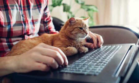 Cómo hacer para educar a un gato fácilmente