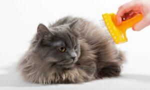 10 accesorios imprescindibles para gatos y sus cuidados adecuados