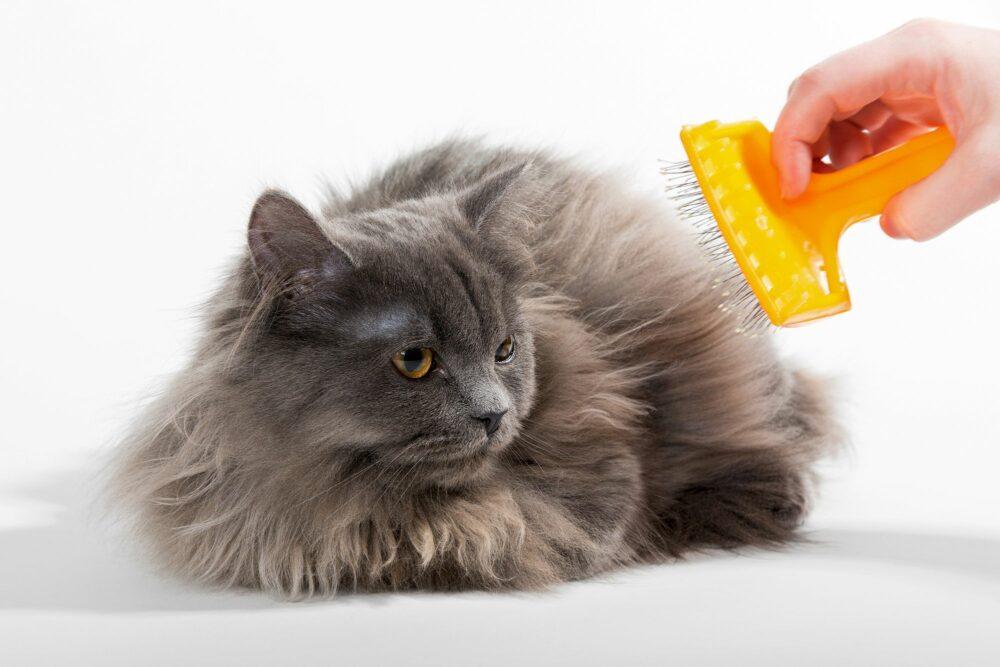 accesorios imprescindibles para gatos
