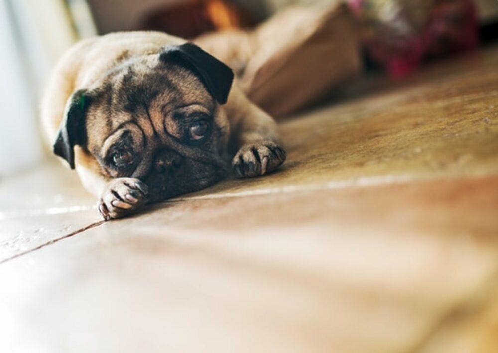 cosas que rompen el corazón de tu perro