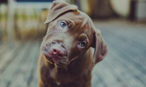 10 cosas que rompen el corazón de tu perro y seguramente no lo sabías