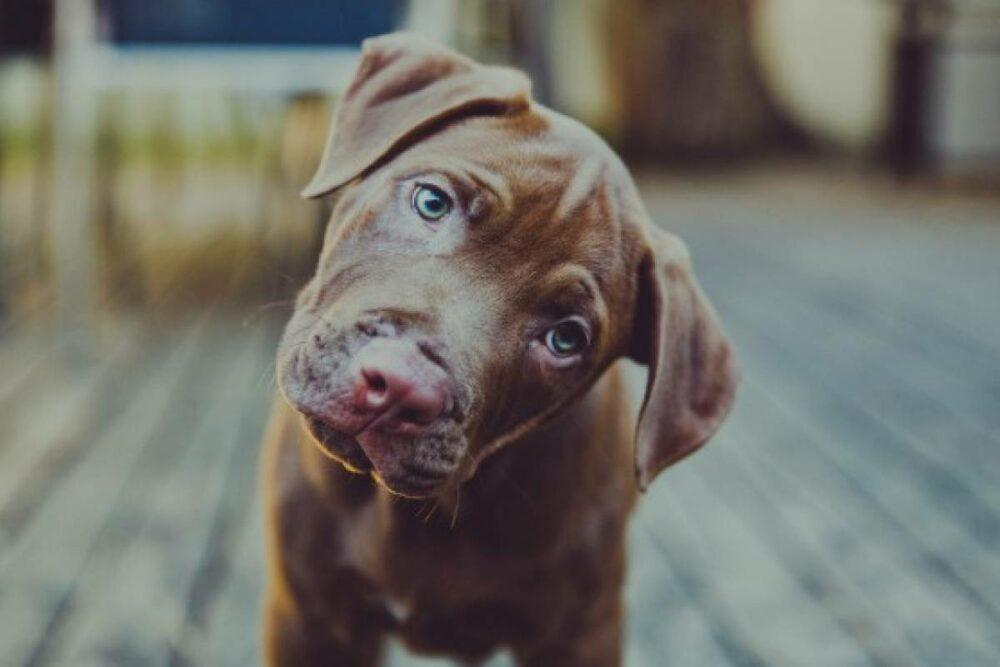 10 cosas que le rompen el corazón a tu perro sin que lo sepas