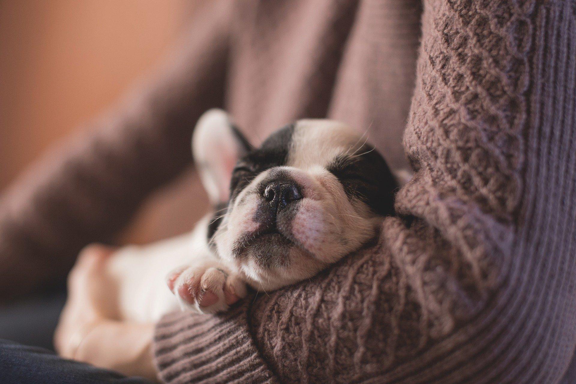 ¿Cuánto dinero cuesta mantener un perro cada mes y al año?