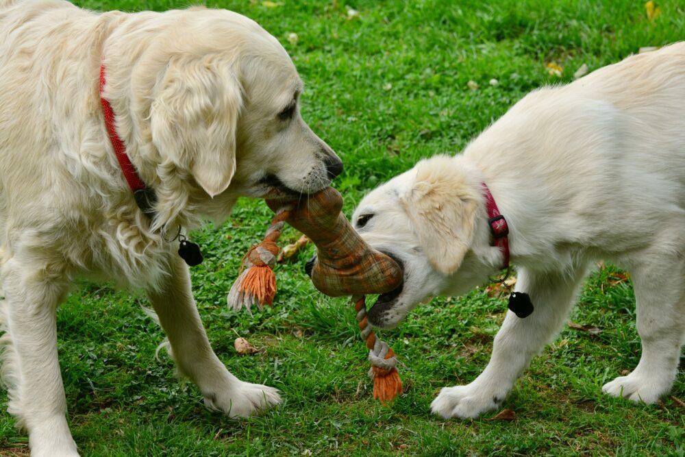 los juguetes, un gasto necesario para tener perro