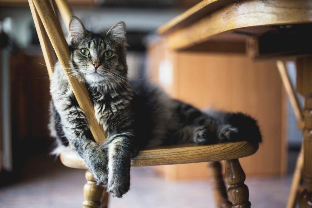 Complementos estéticos para gatos