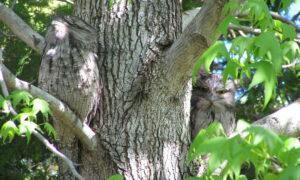 Mimetismo: el arma secreta de la naturaleza que nos hemos apropiado