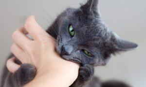 Principales motivos por los que un gato muerde y cómo evitarlo