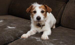 Trucos para limpiar el pelo de perro o gato de los muebles y ropa