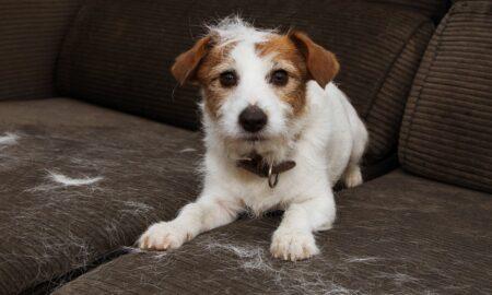 limpiar el pelo de perro o gato de los muebles y ropa