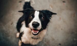 Cómo enseñar a tu perro a sentarse, tumbarse y que obedezca sin correa