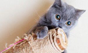 Los 7 mejores rascadores para gatos por menos de 50 euros del mercado