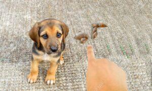Cómo regañar a tu perro para que te obedezca y técnicas de socialización