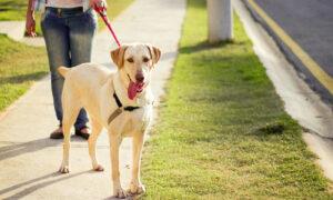 Tipos de arneses para perros y cuál utilizar en cada tipo de perro