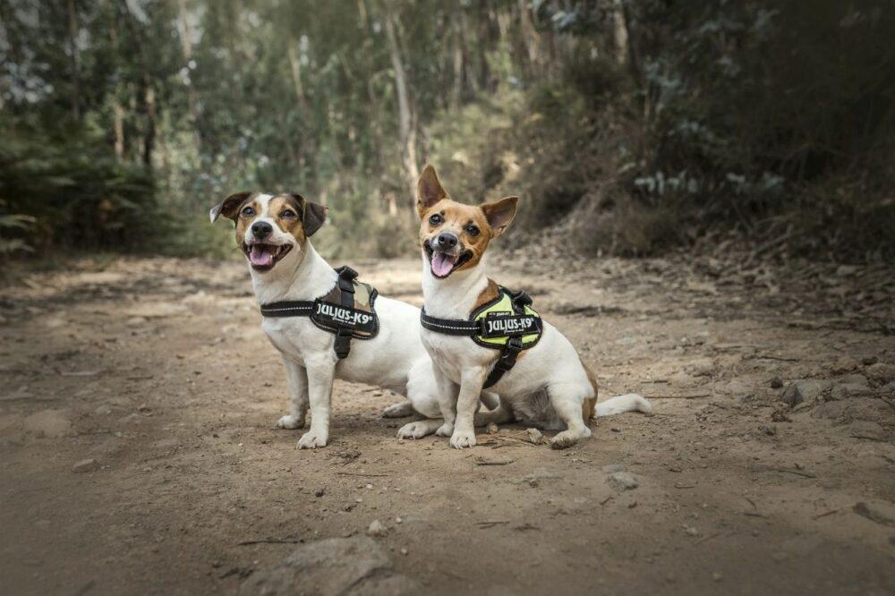 Tipos de arnese para perros pequeños